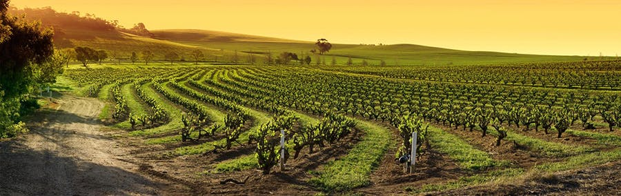 Iconic Barossa Valley Experience