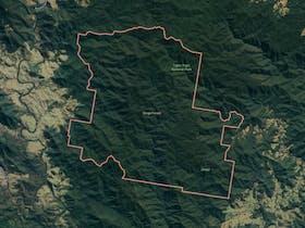 Dingo Forest image