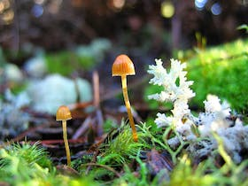Fungi fairy garden Pegarah Private Nature Reserve King Island