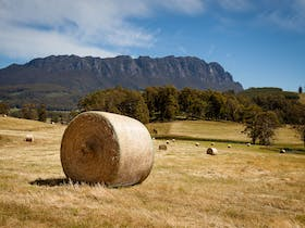 Bales of hay on a Sheffield property