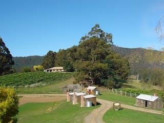 Hartzview Vineyard