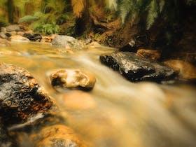 Notley Fern Gorge