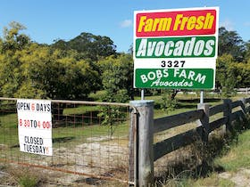 The Avocado Farm