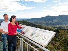 Whyte Hills Lookout Waratah