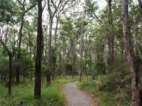 Greater Wetland Walk