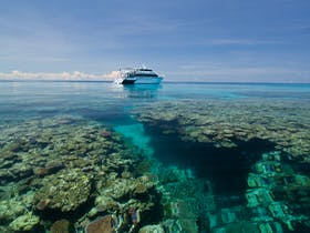 Cairns great barrier reef 39 s official tourism site travel info for your tropial north - Pro dive cairns ...