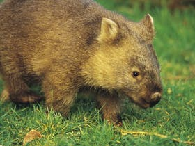 Healesville image