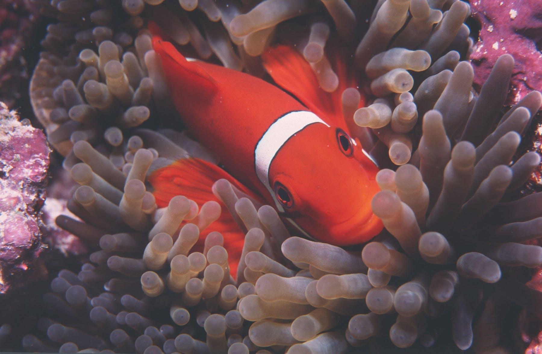 Great Detached Reef