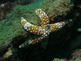 Mudjimba (Old Woman) Island Dive Site