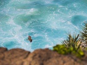 Birdwatching on the Fraser Coast