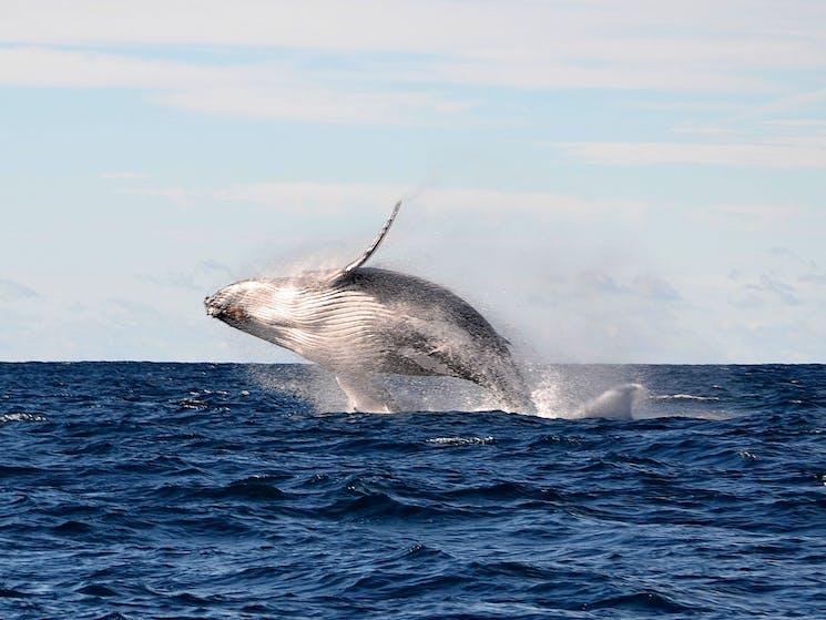 Whale Watching Sydney Safari