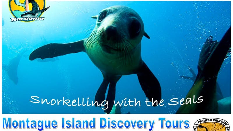 Snorkel with the Seals Adventure - 3.5 Hours