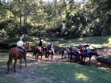 Kangaroo Valley Horses