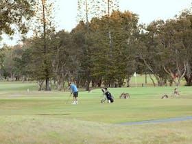 Yamba Veterans Week of Golf