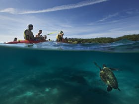 See turtles from your kayak