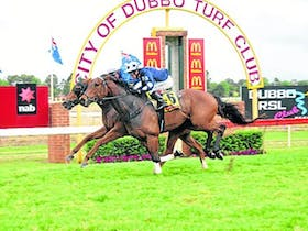 Melbourne Cup - Dubbo Turf Club