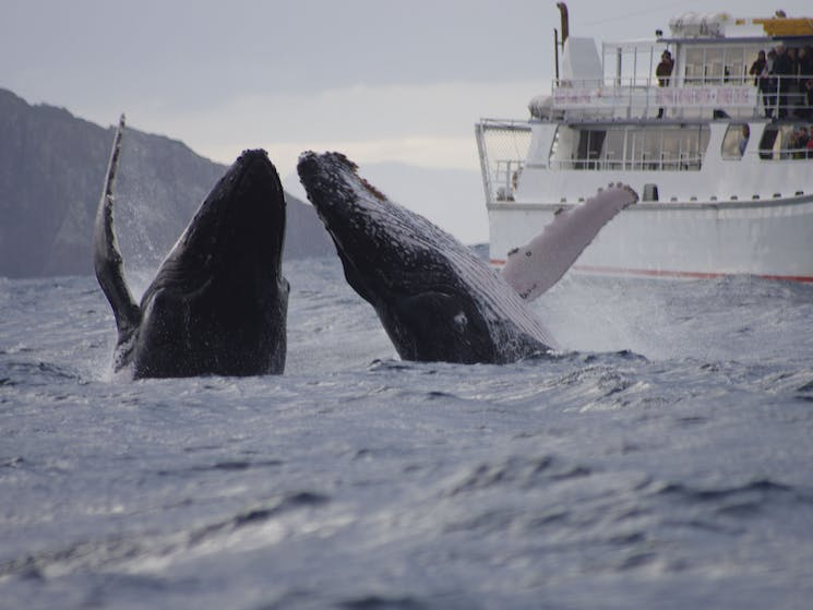 Whale Watching With Moonshadow Cruises