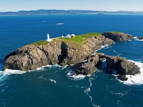 South Solitary Island Exclusive Helicopter Tour