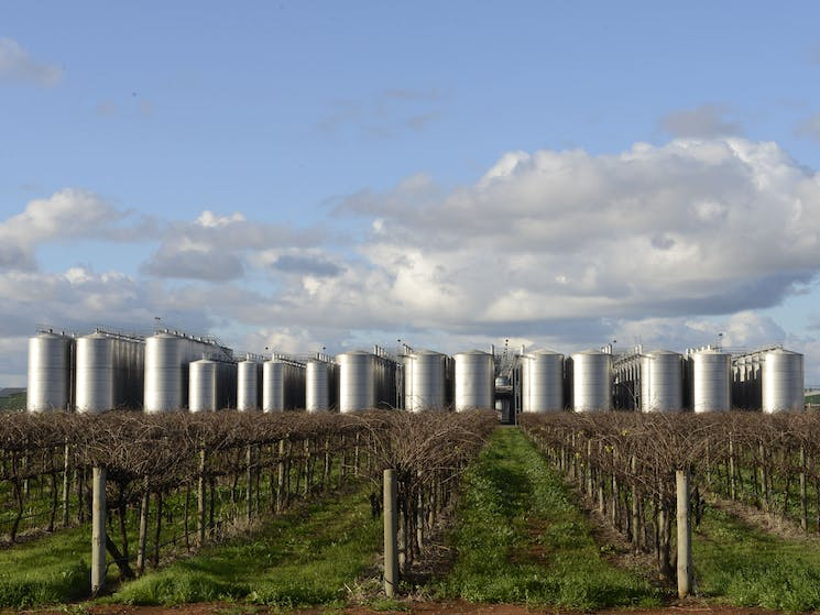 Vineyard and Tank Farm.  Winery. This area produces 75 percent of NSW wines.