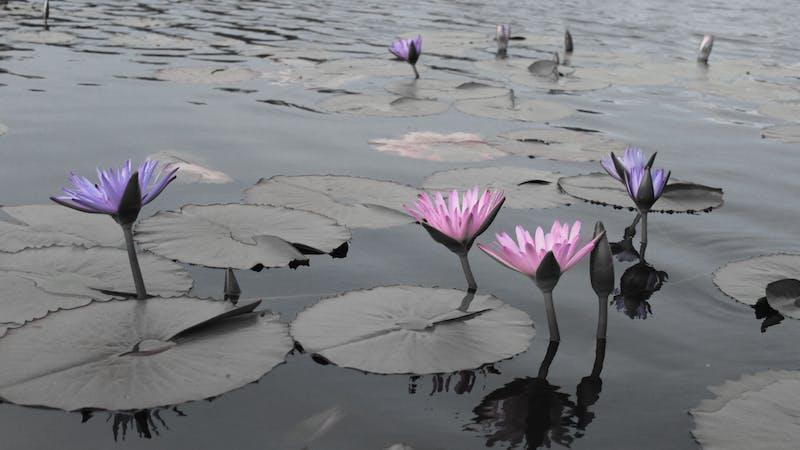 Abundance Lifestyle and Garden