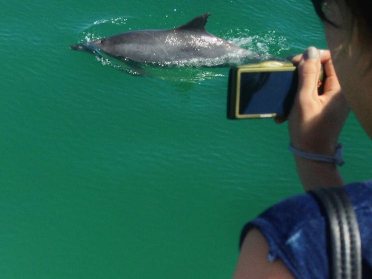 Dolphin Watching with Moonshadow Cruises