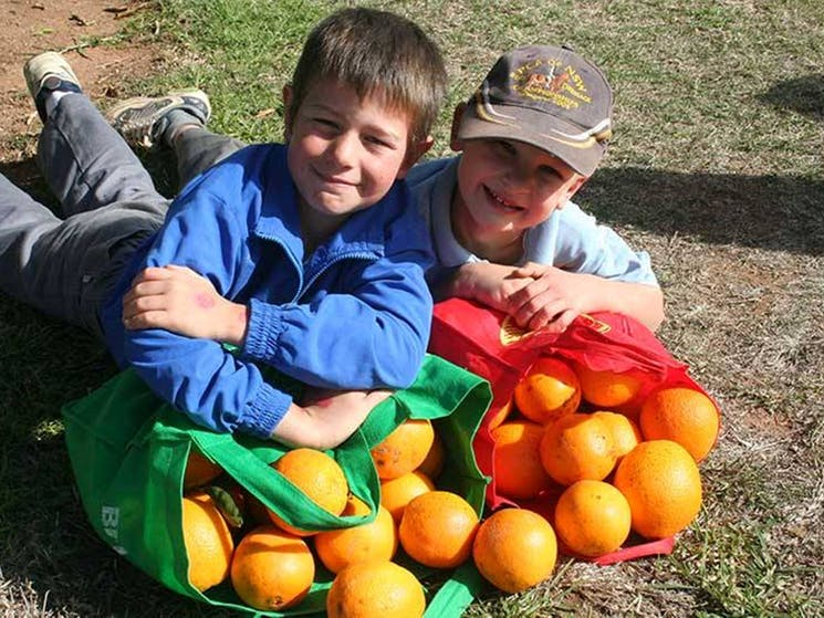 Bingara's juicy oranges are a living memorial to the towns fallen soldiers