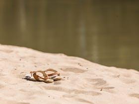 Sandles at the Murrumbidgee River beach