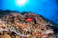Coral Trout with Beautiful Reef