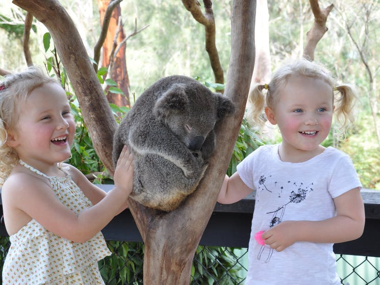 Australian Reptile Park koalas