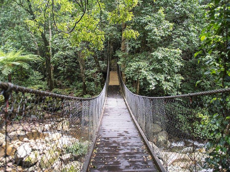 Suspension bridge in a bush environment