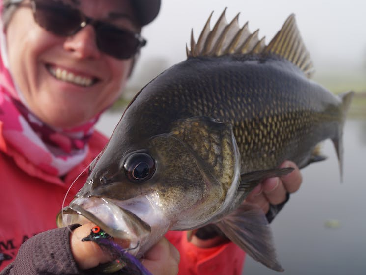Fly fishing for Australian Bass