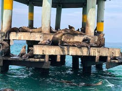 Snorkel with the seals