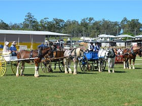 Gatton Heavy Horse Field Days 2021