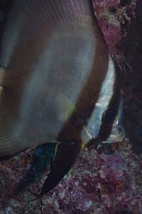 Whale Bommie Dive Site