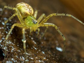 Spiders: Alive and Deadly