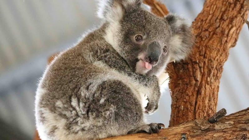 Billabong Zoo: Koala and Wildlife Park