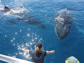 Freedom Whale Watch and Dive Charters
