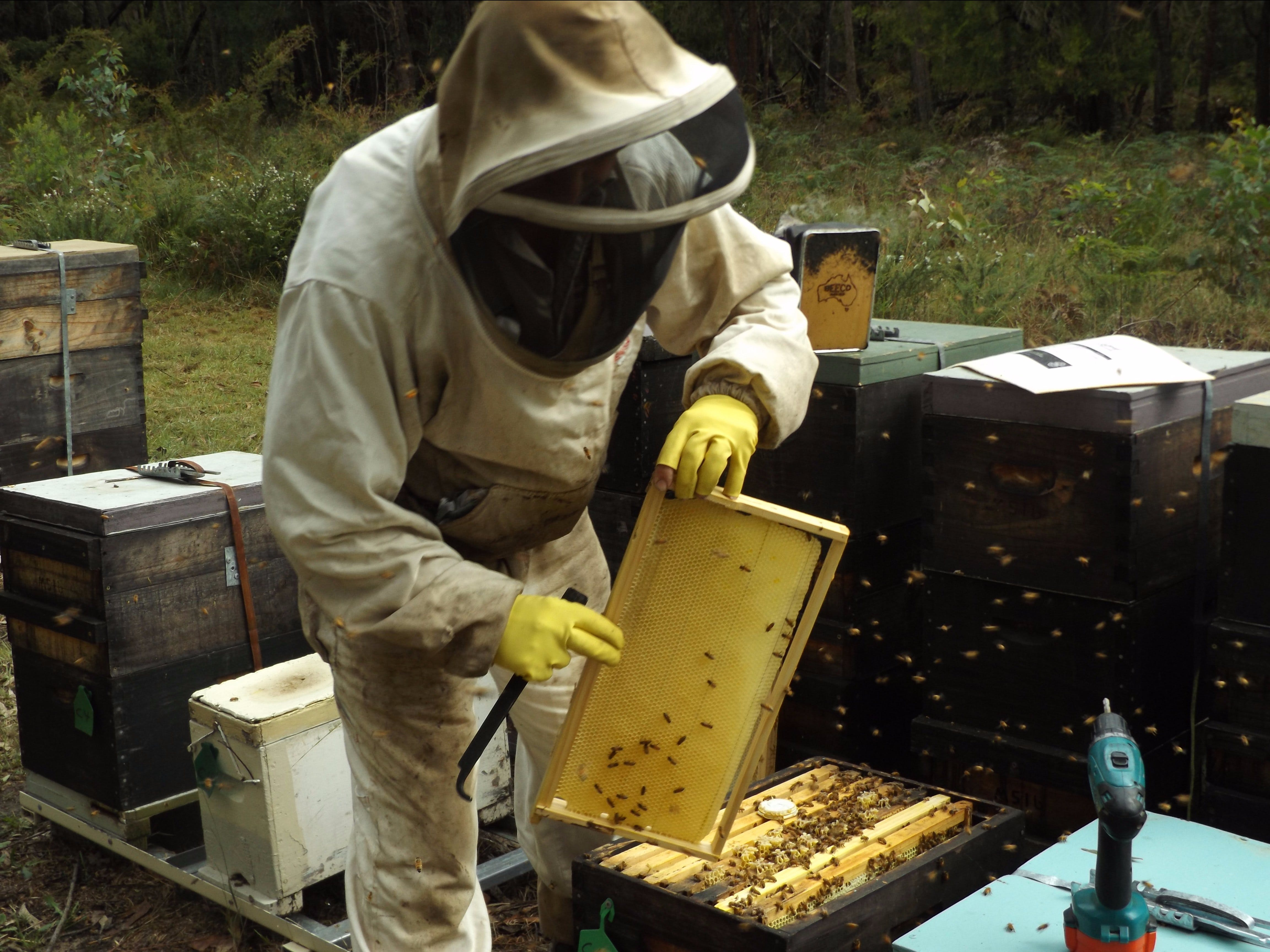 Working with the bees
