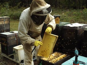 Photo of Mogo Village Honey Beekeeping Tours