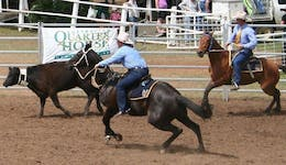 Image of the event 'Dalgety Team Penning'