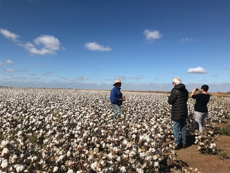 Australia By Air Outback Air Tour - standing in the cotton fields during the Corynnia Farm tour