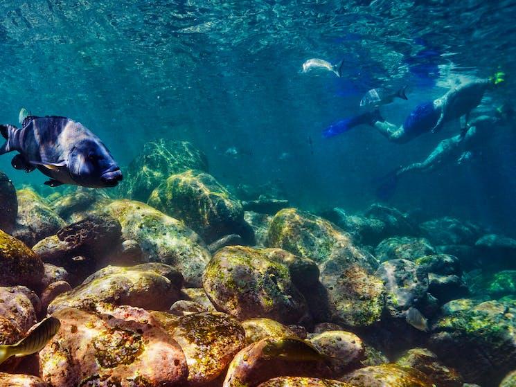 Cabbage Tree Bay Snorkeling