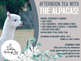 Afternoon Tea with the Alpacas!