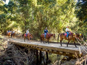 Horse riding through bushland