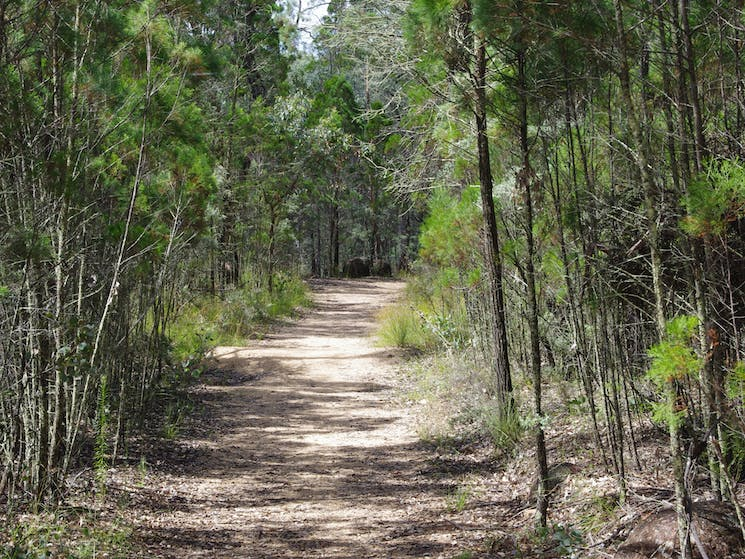 Gravel Walking Trail with trees on either side