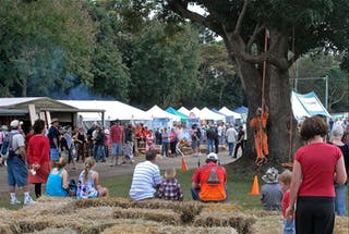 Maleny Wood Expo: From Seed to Fine Furniture