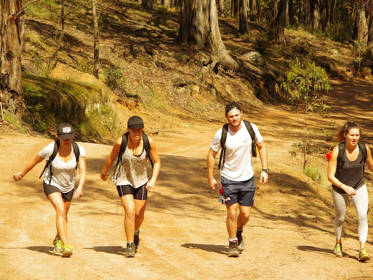 Trekking on The Six Foot Track in The Blue Mountains