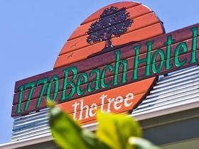 1770 Beach Hotel - The Tree