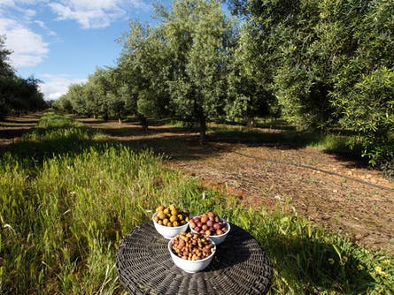 A Lunch in the Olive Grove -Sun Country Food and Wine Festival