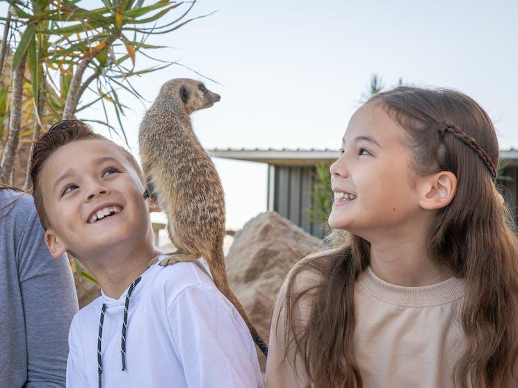 Meerkat Encounter at Sydney Zoo